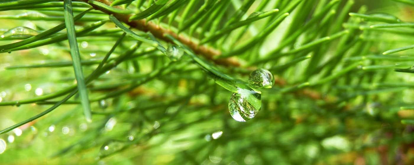 Ekologisk & hållbar hudvård